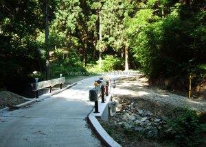 woodland-path2
